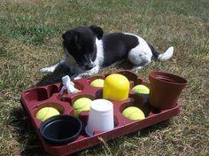 Blumenkisten Spiel (Suchspiel für den Hund), von corinna