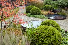 Beautiful combination - clipped box balls, round reflection ponds, brick path and autumn colours.