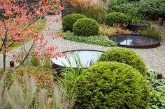 необыкновенная игра осенних красок в саду. ландшафтное бюро МОХ.