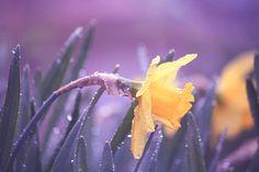 Sweet Rain by on DeviantArt
