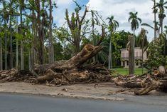 Hurricanes Irma and Maria were two of the largest and costliest hurricanes to ever strike the Caribbean. Among the countries that lost lives and suffered from catastrophic damage were: Barbuda, Saint Barthélemy, Saint Martin, Anguilla, the Virgin Islands, Cuba, Haiti and Puerto Rico. Months later, residents are still dealing with the aftermath. The small island…