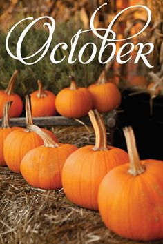 Happy October everyone! have you bought a pumpkin yet this season? My name is Cady and I love all things about Halloween and the Fall season! Happy October, Happy Fall Y'all, Hello September, October Fall, Hello Autumn, Autumn Day, Harvest Time, Fall Harvest, Diy Photo