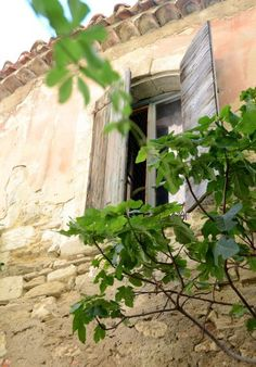 and Provence French Country Farmhouse, French Countryside, La Provence France, Under The Tuscan Sun, Looking Out The Window, Fig Tree, South Of France, Country Life, Wine Country