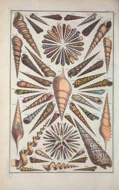 patternprints journal: WONDERFUL DECORATIONS AND TEXTURES INTO ALBERTS SEBA'S BOOK ABOUT SHELLS AND MARINE LIFE