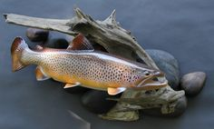 Fish Wood Carving, Fish Mounts, Fly Fishing, Fishing Stuff, Fish Sculpture, Brown Trout, Rainbow Trout, Fish Art, Taxidermy