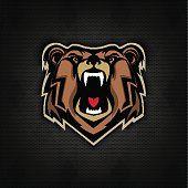 Irritada cabeça de urso num fundo escuro. Desporto de Equipa