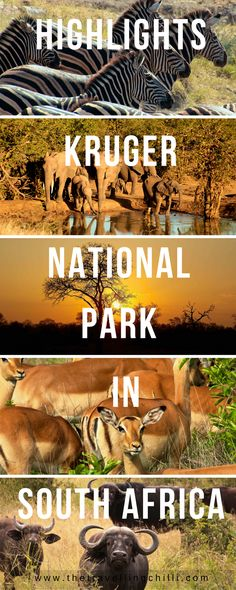 Top highlights of the Kruger National Park in South Africa | 6 Highlights of the north of Kruger National Park in South Africa #Southafrica #Krugernationalpark #Safari #Africansafari