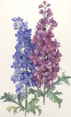 Delphinium - The art of Carolyn Shores-Wright
