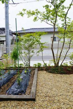 Shiga, Green Flowers, Modern, Plants, Gardening, Trendy Tree, Lawn And Garden, Plant, Planting