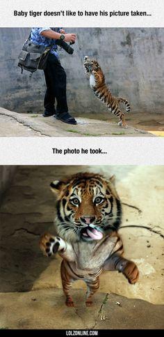 Fiercely Adorable#funny #lol #lolzonline
