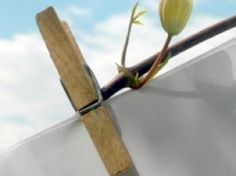 Assouplissant et lessive naturels pour votre linge ancien • Hellocoton.fr