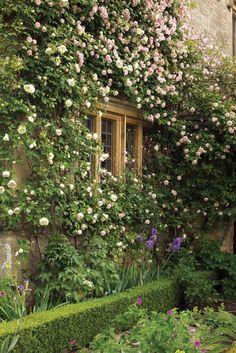 Depósito Santa Mariah: Jardins, Acalmam O Coração!