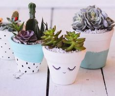 Decorating terra cotta pots in an easy way to add color to your plantings! Create something fun for your home by painting your own terra cotta pots. Painted Clay Pots, Painted Flower Pots, Planting Succulents, Planting Flowers, Succulent Pots, Suculentas Interior, Plantas Indoor, Cactus E Suculentas, Garden Web