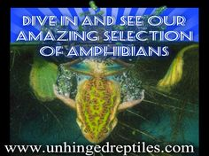 Dive In to our selection of Amphibians