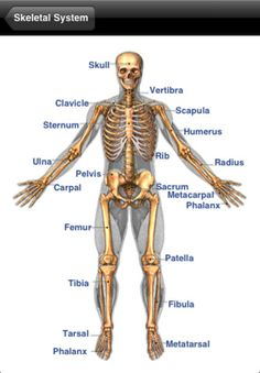 and others who would like to learn the names of various body parts ...
