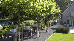 gardens in a straight line | 96 best images about Landscaping / straight lines ...