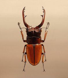 [ Nothing. Life. Object ] Oil on canvas 74x74cm 2007 #김영성#극사실#하이퍼리얼리즘#그림#유화#미술관#극사실주의#개구리#미술#현대미술#YoungsungKim#ykim#Hyperrealism#hyperrealistic#oil#painting#drawing#contemporary#art#handpainted#environment#frog#snail#insect#goldfish#animal#sculpture#museum#artgallery#beetle by _y_kim
