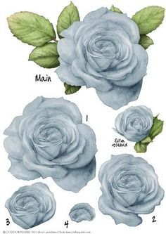 Light Blue Rose Decoupage Sheet on Craftsuprint designed by Gordon Fraser - A beautiful large rose, (will roughly fit in 6x6 square) decoupage sheet. All layers numbered plus a one off smaller rose. Brilliant for your designs! More colours available and watch out for the matching paper kit. Please click on my name to see more of my designs! - Now available for download!