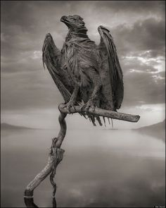 Strange Animals Retweeted Nature Is Weird @NaturelsWeird 4h4 hours ago  Birds & bats that die in Lake Natron, Tanzania, become solidified due to large amounts of salt & soda in the waters.