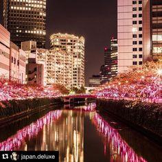 One of the greatest photographers #Repost @japan.deluxe with @repostapp.  Is it a Dream ? #japannight #japantrip #japantravel #japanlover #japantrip #amazingjapan #beautifuljapan #japanphoto by japanwirelesstokyo