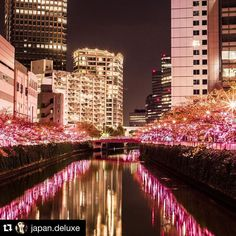 One of the greatest photographers #Repost @japan.deluxe with @repostapp.  Is it a Dream ? #japannight #japantrip #japantravel #japanlover #japantrip #amazingjapan #beautifuljapan #japanphoto by japanwirelesstokyo