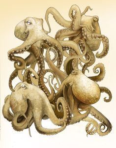 Octopuses, Stacey Lynn Freeman