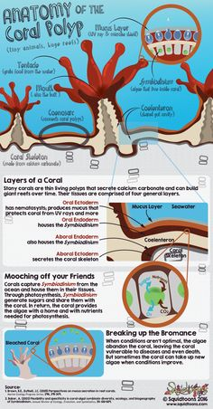 Anatomy of Coral Polyp.