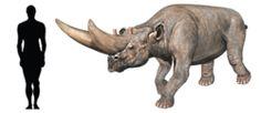 "Prehistoric taxonomie | Arsinoitherium zitteli (""Arsinoe's beast"")..."