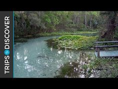 Rock Springs Run is Florida's Natural Lazy River - TripsToDiscover.com