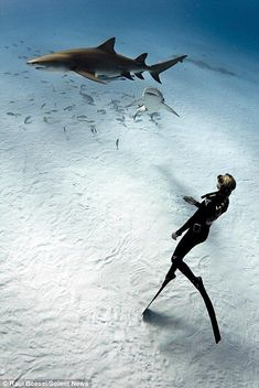 A diver swims with the sharks | only in the bahamas | beautiful clear waters and white sand: