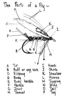 Parts of a fly. For more fly fishing and fly reels please follow and check out www.theflyreelguide.com Also check out the original pinners Fishwest site and support. Thanks #flyfishing