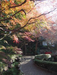 #momiji, #maple, #autumn leaves, #garden, #path,