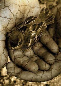 Humanity... Bird in hand. Stone hand.