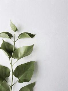aesthetic beige desktop инстаграм plant ru background wallpapers backgrounds iphone screen instagram summer обои wachabuy