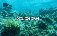 scuba dive.  Even though being a bit claustrophobic might make this difficult.  But would love to try it!