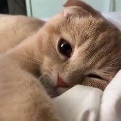 Cute Funny Animals, Cute Baby Animals, Animals And Pets, Cute Cats, Animals Images, Funny Cat Images, Funny Cats, Kittens Cutest, Cats And Kittens