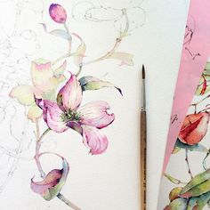 Dogwood in watercolor on Behance