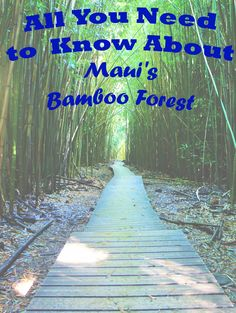 Follow me on another adventure to the Bamboo Forest on Maui.