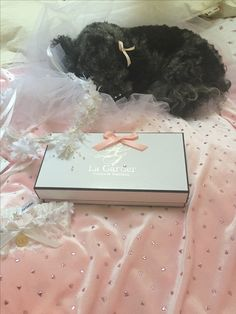 Izzy sleeping on an antique veil. (Izzy the Cockapoo)