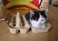 if only egg cartons came with kittens!