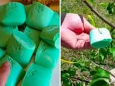 If you're concerned about pesky rabbits, deer and other herbivores munching on your trees and plants, look no further than Irish Spring soap. Irish Spring smells wonderful, but there is more to this soap than its great scent. Irish Spring soap can … Organic Gardening, Gardening Tips, Get Rid Of Squirrels, Rabbit Repellent, Rabbit Deterrent, Pot Plante, Little Gardens, Garden Pests, Garden Bugs