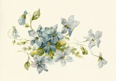 Free Vintage Flower Graphics | Antique Images: Free Flower Clip Art: Vintage Illustration of a Bunch ...