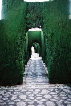 green garden arches #labyrinth
