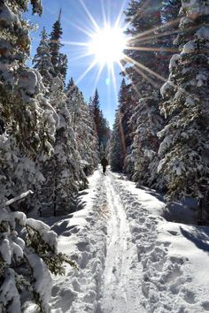 Cross country skiing in Montana - a perfect way to keep the chub away during the winter months Winter Fun, Winter Snow, Winter Time, Winter Months, Stations De Ski, Nordic Skiing, Big Sky Country, Cross Country Skiing, Winter Beauty