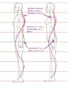 Learn To Draw People - The Female Body - Drawing On Demand Anatomy Sketches, Anatomy Drawing, Anatomy Art, Anatomy Reference, Art Reference Poses, Drawing Reference, Drawing Body Proportions, Body Drawing, Drawing Lessons
