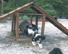 Dog play ground equipment.  My dogs need this in the backyard!