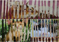 Kočky,kam se podíváš | Výtvarná výchova vytvořit novou skutečnost prolnutím dvou obrazů pomocí pravidelného střídání proužků (proláž / dvou obrazová roláž)