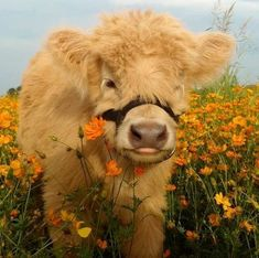 Tagged with fluffy animals, funny animals, stay save, be ware; Shared by fluffy animals for you Cute Baby Cow, Baby Cows, Cute Cows, Cute Babies, Baby Elephants, Cute Creatures, Beautiful Creatures, Animals Beautiful, Pretty Animals