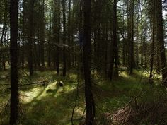 ordinary czech forest, but for me it's magical place