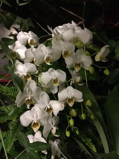 A true cascade of flowers. All just one orchid.